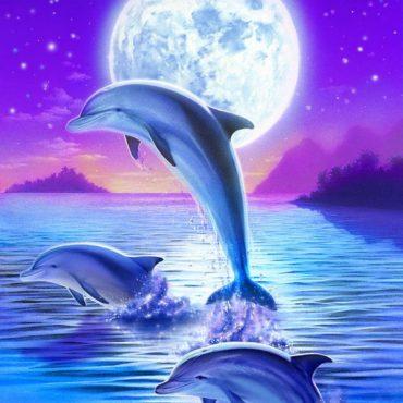 A delfinek éneke
